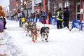 CopperDog 150 Sled Dog Race 15-3-_0657