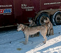 Apostle Islands Sled Dog Race 13-2_0406