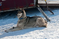 Apostle Islands Sled Dog Race 13-2_0410
