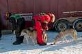 Apostle Islands Sled Dog Race 13-2_0411