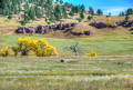 Road to Custer State Park 17-10-01125