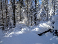 ABR Ski Trails 18-1P-_0112a