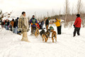 Apostle Islands Sled Dog Race 11-2-_2518