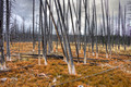 Ghost Forest 14-9-_2289a