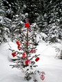 Miljes Ski Trails Valentine' Tree 11-_2185
