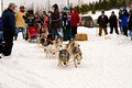 Apostle Islands Sled Dog Race 11-2-_2460