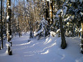 ABR Ski Trails15-1-_2736
