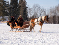 Northwoods Harness Club Sleigh and Cutter Rally Ashland 17-1-2330
