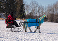 Northwoods Harness Club Sleigh and Cutter Rally Ashland 17-1-2333