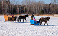 Northwoods Harness Club Sleigh and Cutter Rally Ashland 17-1-2273