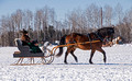 Northwoods Harness Club Sleigh and Cutter Rally Ashland 17-1-2263